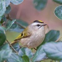 Seward Park Audubon Center