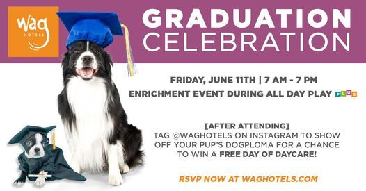 Graduation Celebration (for dogs) at Wag Hotels