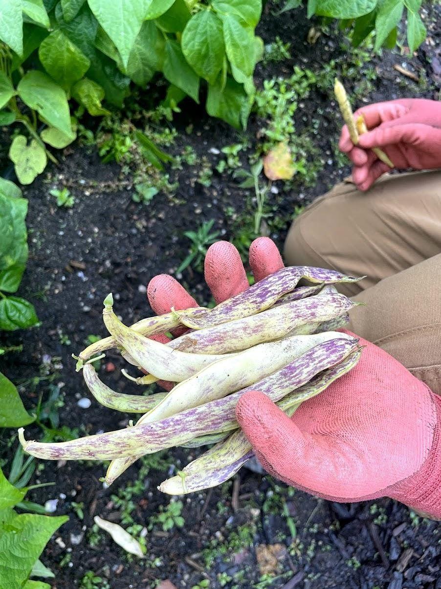 Farming 101 Workshop: Seed Saving