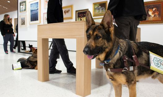 Fidelco Dog Day: Phase 2 of Guide Dog Training