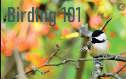 Birding 101 Virtual Workshop