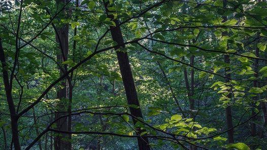 Fernbank Forest Walk