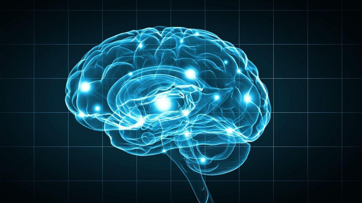 The Neuroscience of Awakening