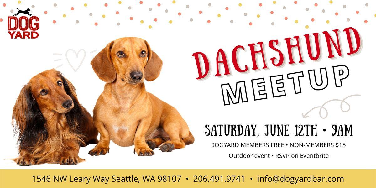 Dachshund Meetup at the Dog Yard