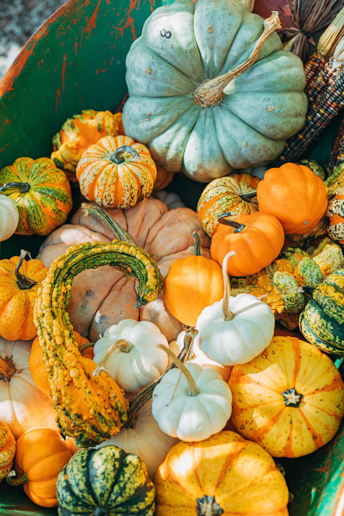 Family Paint & Sip: Pumpkin Decorating