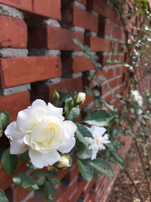 Roses & Ros\u00e9