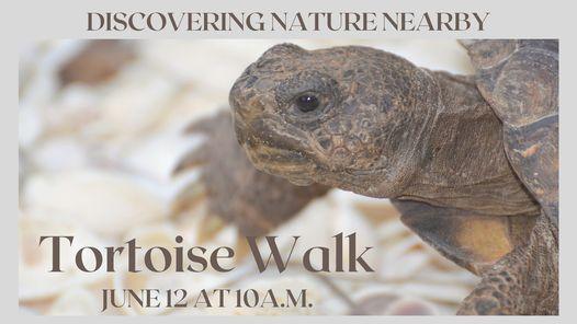 Tortoise Walk - Sponsored by TD Bank