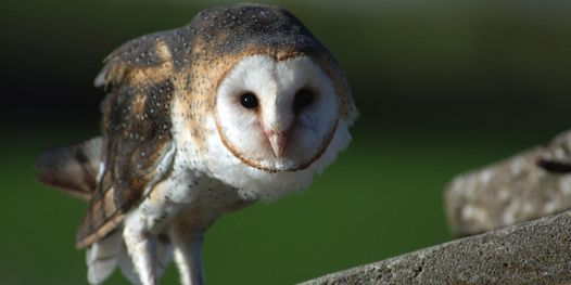 Take A Child Outside Week: Owls, adaptations, and pellets! at Bay Preserve