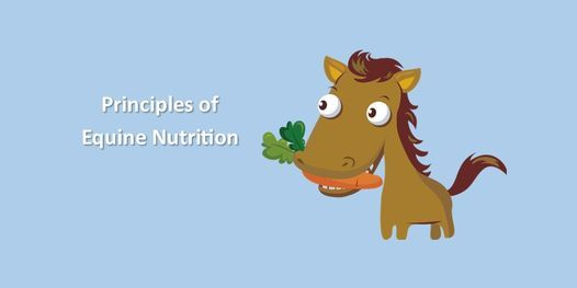 Principles of Equine Nutrition