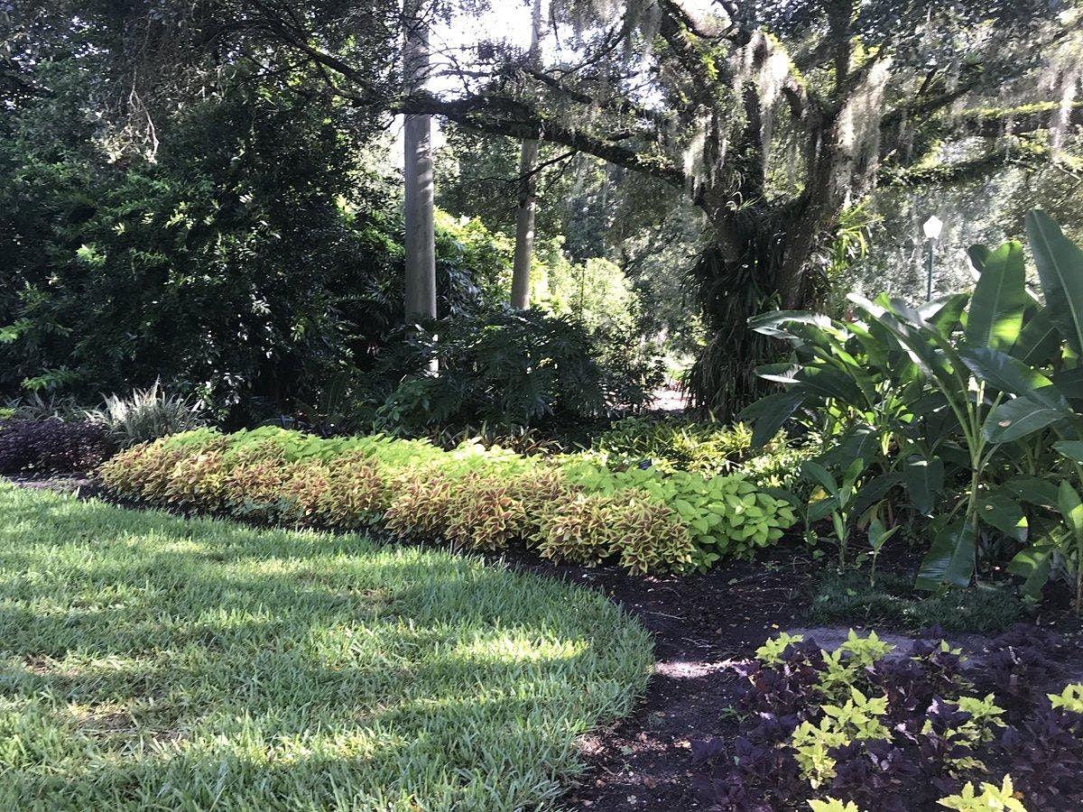 Transplanted Gardener (New to Florida?)