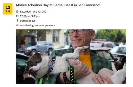 Mobile Adoption at Bernal Beast!