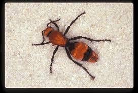 9-20-21 Good Bug\/Bad Bug