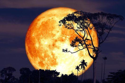 Latino Moonlight Sereades-Buck Moon