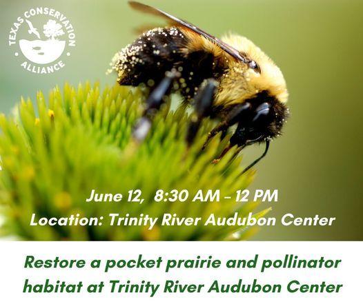 Restore a pocket prairie and pollinator habitat at Trinity River Audubon Center
