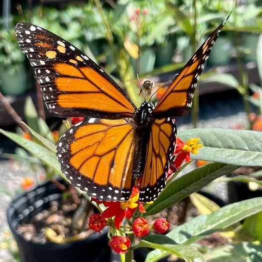 Butterfly Gardening Seminar