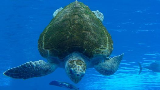 Mini-Camp: Sea Turtle Science