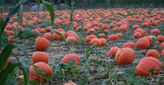 Bates Nut Farm Pumpkin Festival