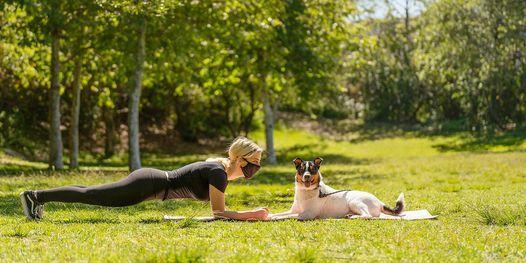 Bark Camp with BarkBody Fitness