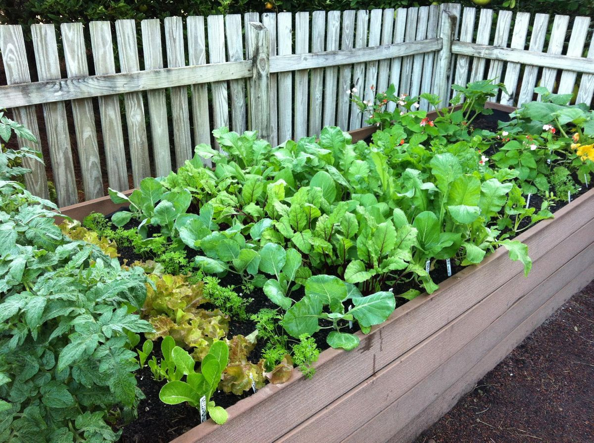 Raised Bed Vegetable and Herb Gardening