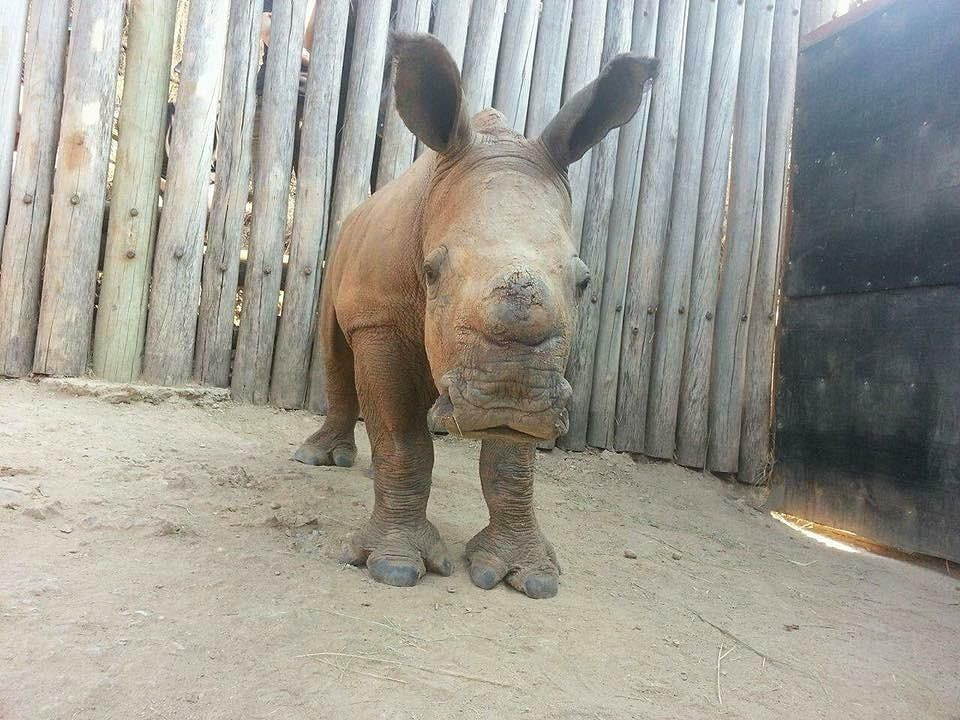 Learn about Rhino Conservation  at Lekker Coffee & Watering Hole